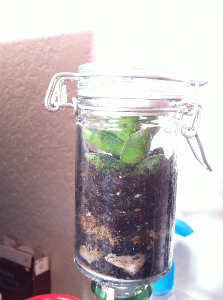 Mini Succulent Terrarium